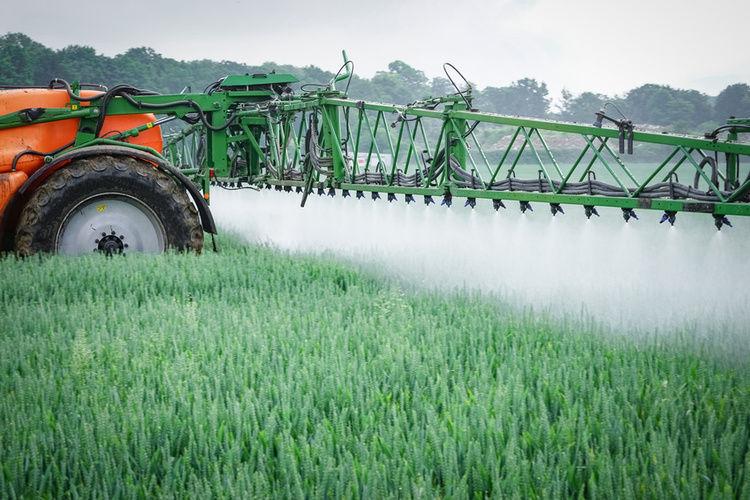 In der Unkrautbekämpfung auf dem Feld ist Glyphosat ein kritisches Thema.