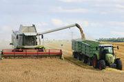 Ernte gut, alles gut? In Getreideproben taucht ein Pflanzengift auf.