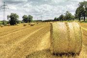 Trotz der Starkregen ist bei Menge und Qualität eine gute Ernte eingebracht worden.