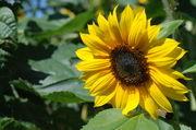 Weiterhin darf nur die Hofpfisterei Brote mit Sonnenblumenkernen mit dem Begriff