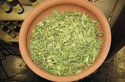 Die Blätter der Steviapflanze, einem südamerikanischen Süßkraut, schmecken etwa 300-mal süßer als Zucker.