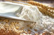 Der Vorteil von Bio-Getreide: Klare Vorgaben für den Anbau sichern Herkunft und Qualität des Rohstoffes und bedienen den Wunsch der Verbraucher nach natürlichen Produkten.