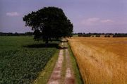 Die Kultivierung des Getreides trägt nach Meinung britischer Forscher maßgeblich zum ökologischen Fußabdruck bei.