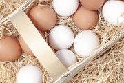 Im vergangenen Spätsommer sind europaweit fipronilbelastete Eier aus dem Verkehr gezogen worden.