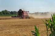 Rund 10.000 landwirtschaftliche Betriebe sind durch Hitze und Trockenheit in ihrer Existenz bedroht.