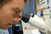 Weniger Lebensmittelkontrollen – und damit auch weniger Laboruntersuchungen zur Hygiene.