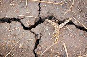 Ernteausfälle haben den Getreidepreis steigen lassen – für viele Bäcker ein Grund für Preiserhöhungen.