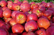 Äpfel vom regionalen Bauer sind mehr gefragt als Bio.