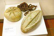 Eines der Exponate: Fußkette mit Gewichten in Brotform aus dem 17. Jahrhundert.