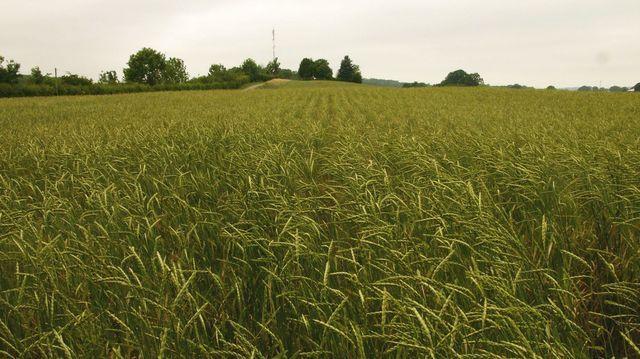 Die Ernte wirkt sich auf die Rohstoffpreise aus.