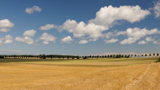 Die Getreidefelder sind abgeerntet.  (Quelle: Kauffmann)