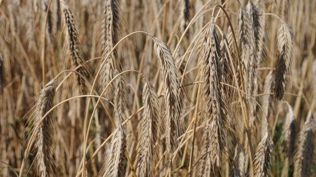 Mögliche Rückstände von Pflanzenschutzmitteln bringen Verbraucher dazu, mehr auf Backwaren aus biologischer Erzeugung zu achten. (Quelle: Archiv/Kauffmann)