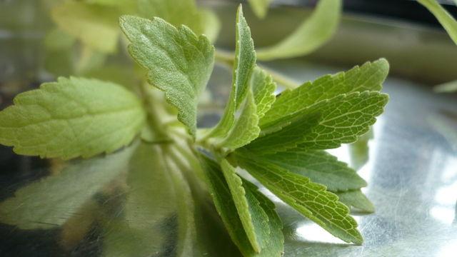Die in den Blättern gebildeten Steviolglycoside sind der Grundstoff des Süßungsmittels Stevia. (Quelle: Sigrid Rossmann / pixelio.de)