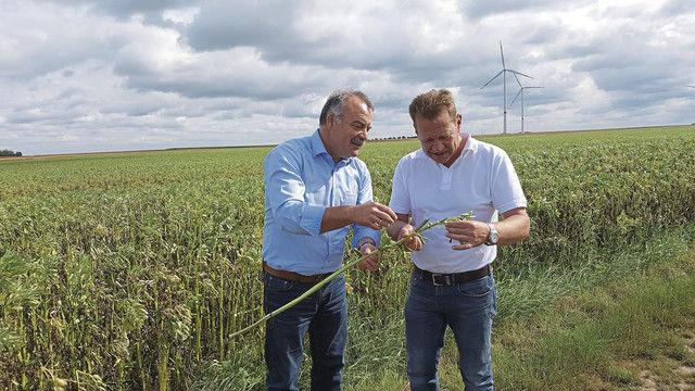 Bäckermeister Jörg Moss (rechts) und Landwirt Karl-Adolf Kremer auf dem Feld bei der Kontrolle der Ackerbohne. (Quelle: Unternehmen)