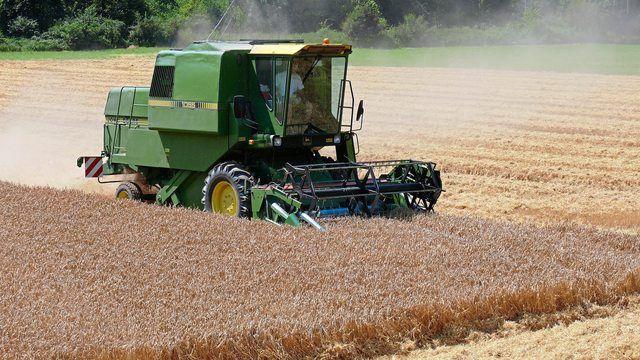 Die Getreideernte ist in diesem Jahr früher angelaufen und bringt schlechte Erträge.  (Quelle: Archiv/Wolf)