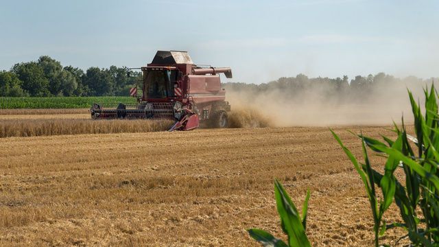 BU: Die Ernteergebnisse fallen in diesem Jahr weltweit schlecht aus.  (Quelle: Fotolia/ Lutz B.)