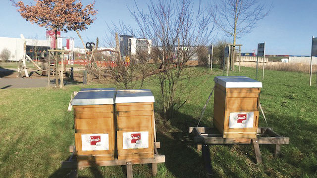 Bienenvölker sterben immer stärker aus. (Quelle: privat)