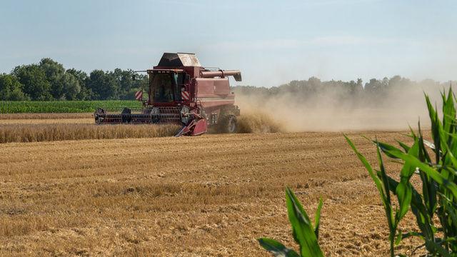 Rund 10.000 landwirtschaftliche Betriebe sind durch Hitze und Trockenheit in ihrer Existenz bedroht.  (Quelle: Fotolia/ Lutz B.)