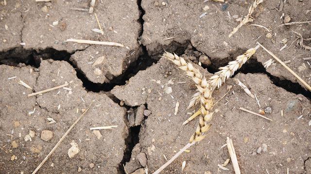 Die Hitzewelle hat die Ackerböden ausgetrocknet. (Quelle: Fotolia/Steve)