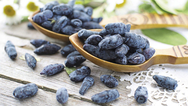 So sieht sie aus, die Haskap-Beere, der gesundheitlich wertvolle Inhaltsstoffe nachgesagt werden. (Quelle: Shutterstock/VeraPetruk)