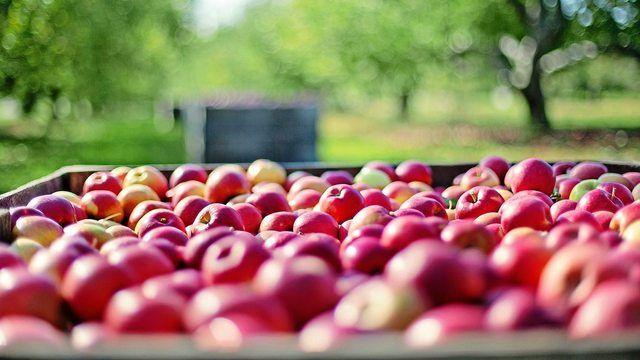 Die Apfelernte fällt 2018 gut aus. (Quelle: pixabay.com/jill111)