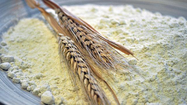 Die goldgelbe Farbe des Mehls ist ein markantes Kennzeichen des neuen Getreides. (Quelle: Agrasys)