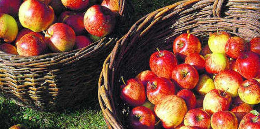 Bio-Vorteile: Die Erzeugung ist umwelt-, tier- und ressourcenschonender.
