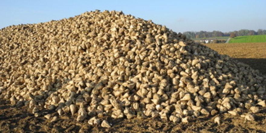 Die Zuckerquote soll heimische Zuckerrübenbauern schützen. Der Erfolg des Systems wird angezweifelt.