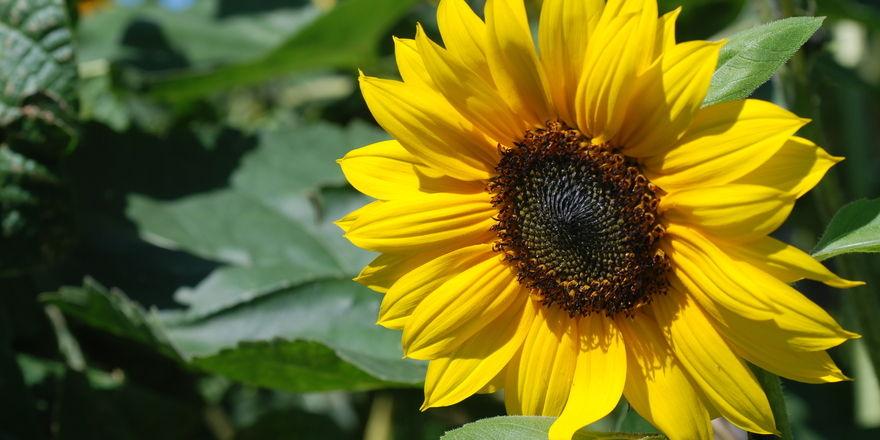 """Weiterhin darf nur die Hofpfisterei Brote mit Sonnenblumenkernen mit dem Begriff """"Sonne"""" bezeichnen."""