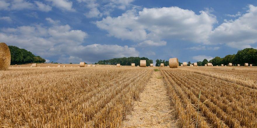 Der heiße August hinterlässt in den Betrieben der Ernährungsindustrie Spuren.