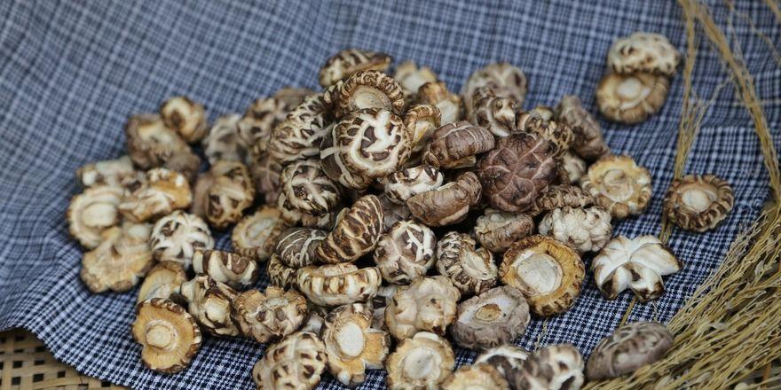 Shiitake-Pilze enthalten zwar das Vitamin B12, jedoch können die meisten Menschen nicht genügend von dem Vitamin aus ihnen aufnehmen.