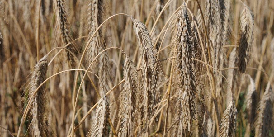 Mögliche Rückstände von Pflanzenschutzmitteln bringen Verbraucher dazu, mehr auf Backwaren aus biologischer Erzeugung zu achten.
