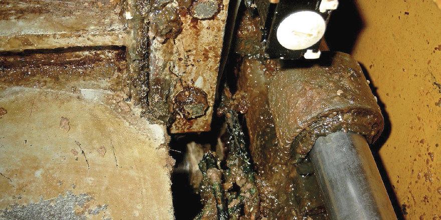 Real existierende Ekelfaktoren: Verunreinigte Teigwirkmaschine...