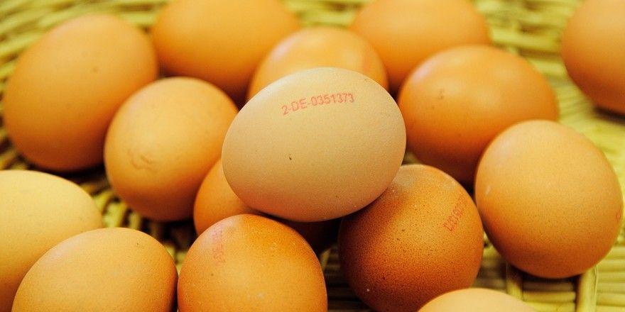 Eier aus Holland und Belgien sind mit Fibronil belastet. Eier deutscher Herkunft scheinen unbedenklich zu sein.