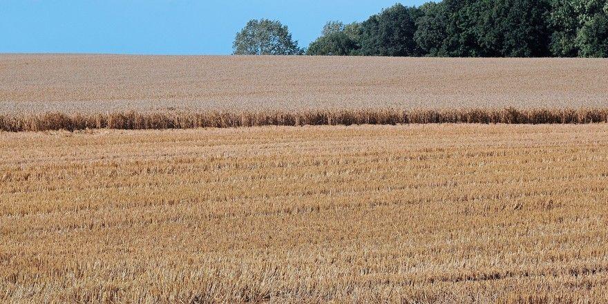 Die Erntearbeiten sind durch die Wetterbedingungen immer wieder behindert worden.
