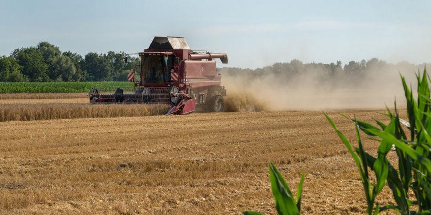 BU: Die Ernteergebnisse fallen in diesem Jahr weltweit schlecht aus.