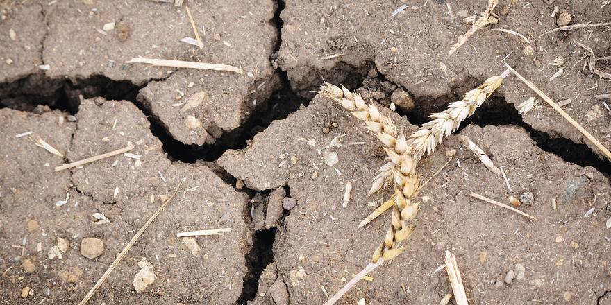 Die Hitzewelle hat die Ackerböden ausgetrocknet.