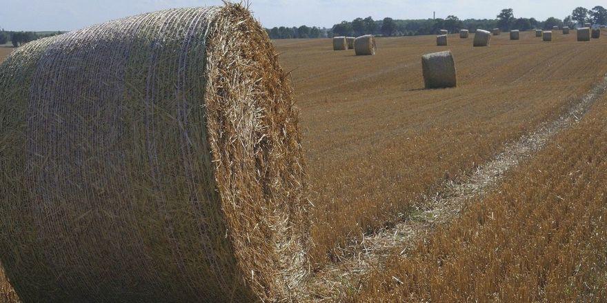 Nach aktuellen Prognosen soll die Erntemenge beim Getreide 47,2 Millionen Tonnen betragen.