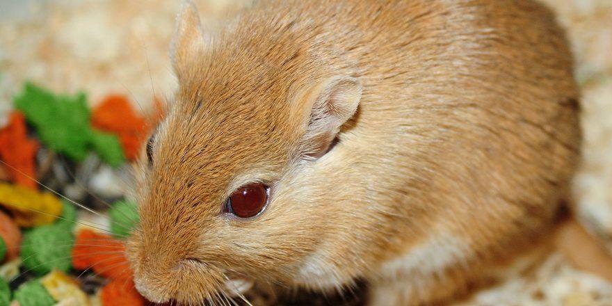 Achtung Schädling: Lebensmittel ziehen Mäuse an.