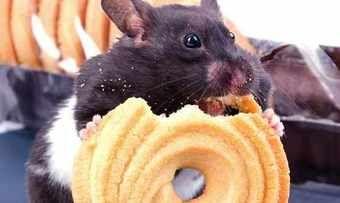 Mäuse stehen nicht nur auf Butterkekse, sondern offenbar auch auf Cronuts. Fotolia.com/Piotr Wawrzyniuk