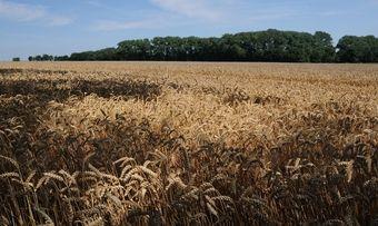 Die Getreidemärkte unterliegen starken Schwankungen. Das hat die Werhahn-Gruppe zu spüren bekommen.