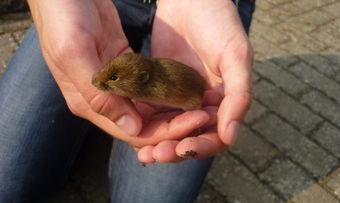 Ekel beim Brotkauf. Ein Aldi-Kunde entdeckte eine Maus im Brot.