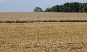 Die Ernte ist in vollem Gange. Regional wird mit starken Ertragsunterschieden gerechnet.