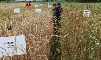 Saatgut steht im Mittelpunkt der Aktion der Freien Bäcker.