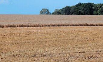 Die Getreideernte hat sich wegen extremer Wetterbedingungen über längere Zeit hingezogen.