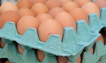 Eier sind derzeit am europäischen wie auch dem deutschen Eiermarkt ein rares Gut.