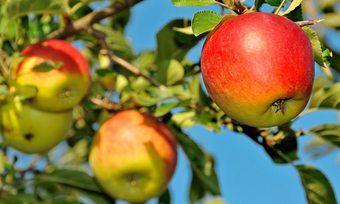 Lebensmittel, die besonders häufig verzehrt werden, wie Äpfel, sind besonders wenig belastet.