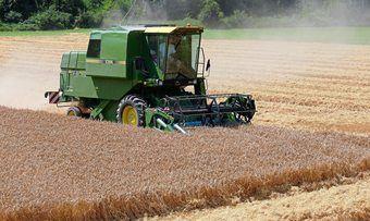 Die Getreideernte ist in diesem Jahr früher angelaufen und bringt schlechte Erträge.