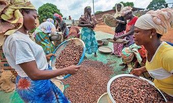 Kakao wird überwiegend in kleinbäuerlicher Erzeugung angebaut und verarbeitet.