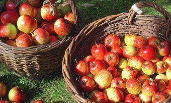 Äpfel sind das meistverarbeitete Obst in Backwaren.